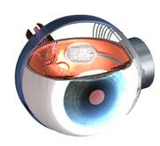 schéma de l'implant pour la rétine artificielle