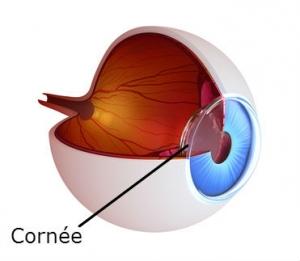 coupe de l oeil montrant la cornée