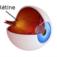 oeil-retine-DMLA