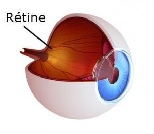 schéma rétine de l'oeil