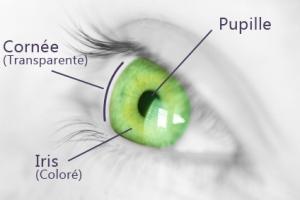 schéma oeil cornée